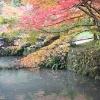 大洞院 紅葉