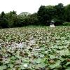 松秀寺 蓮池